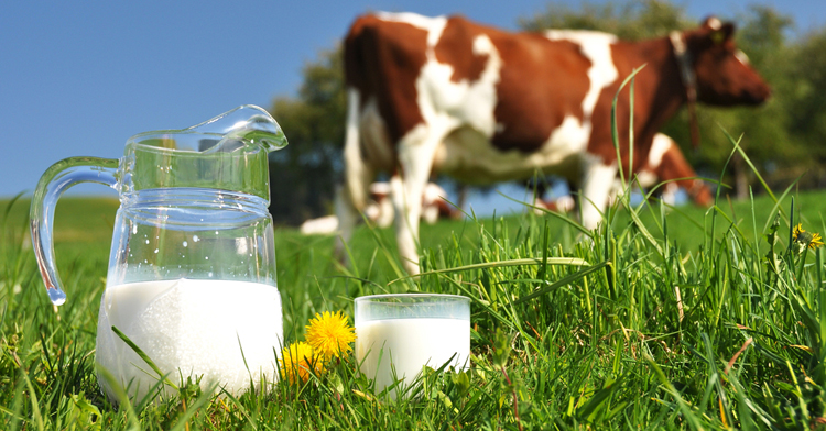 myths-about-cows-milk